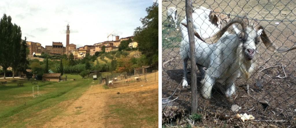 Italy - Siena - Orto de Pecci - 6