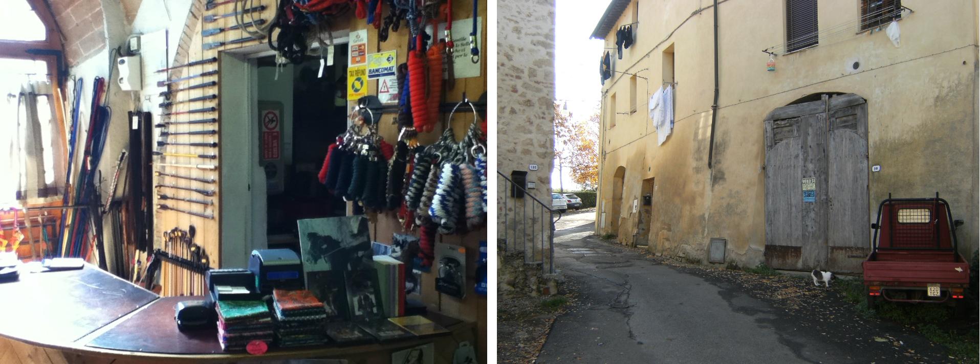 Italy - Colle di val dElsa - Horses - 1.1