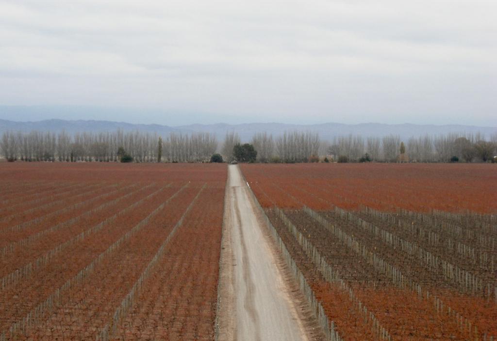 Argentina - Mendoza - Catena Zapata - 9 (1024x704)