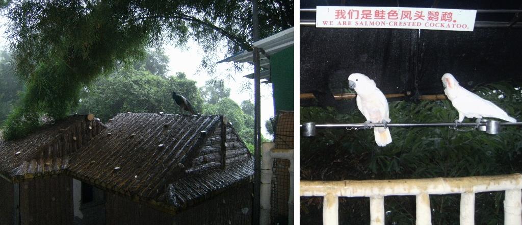 China - Gulangyu Island - Aviary - 1.1 (1024x441)